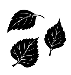 Birch leaves pictogram set vector