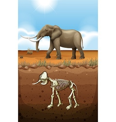 Elephant on the ground and fossil underground vector image