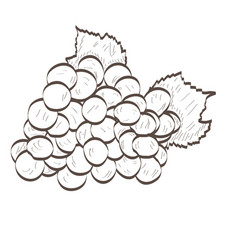 isolated grapes outline vector image