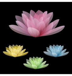 Lotus flowers isolated on a black background vector
