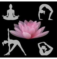 Lotus flower and yoga positions vector image
