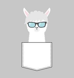 alpaca llama face head in pocket sun glasses vector image