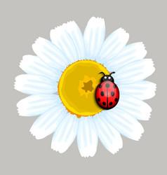 Ladybug and Daisy vector