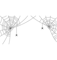 spiders and web halloween background vector image