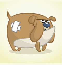 cartoon of a lovely bulldog vector image