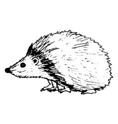 Hedgehog vector