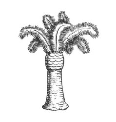 palm coastline tropical tree monochrome vector image