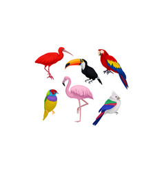 Tropical birds isolated on white background vector