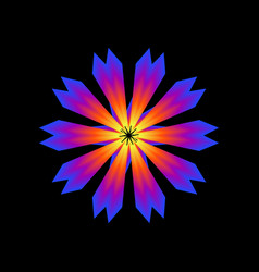 glowing flower vector image