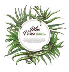 Aloe vera circle frame sketch vector