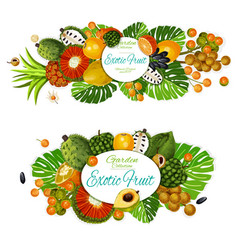 exotic fruits with tropical palm leaves vector image