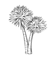 Sabal palm exotic tropical trees monochrome vector