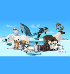 arctic animals cartoon template vector image vector image
