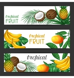 Banners with tropical fruits and leaves Design vector