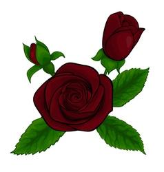 bouquet red roses decorative floral design element vector image