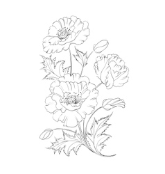 Poppies flower vector image