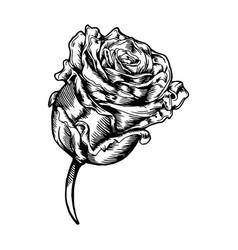 Thin rose icon vector