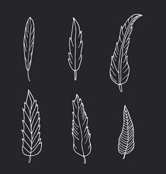 hand drawn set of feathers on black background vector image vector image