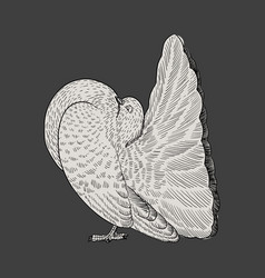 hand drawn couple of white dove vector image