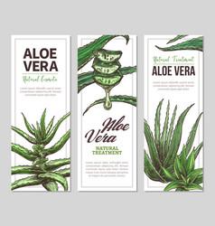 Aloe vera sketch horizontal banners vector