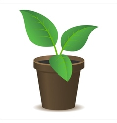 Green plant vector