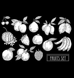 hand drawn fruits set vector image