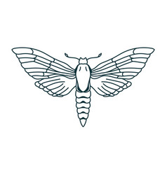 Outline moth drawing isolated butterfly icon vector