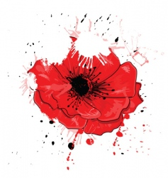 painted poppy vector image vector image