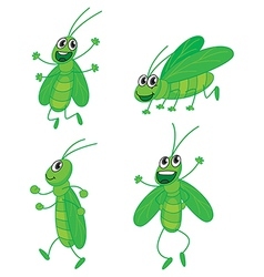 Four grasshoppers vector image