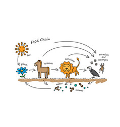 Funny animals food chain vector