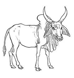 Indian zebu cow vector