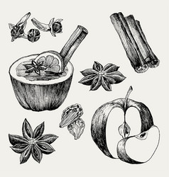 Mulled wine and spices orange apple cinnamon vector