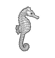 sea horse animal sketch vector image
