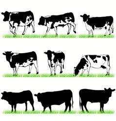 cows bulls vector image vector image