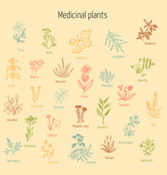 set of hand drawn medicinal herbs vector image vector image
