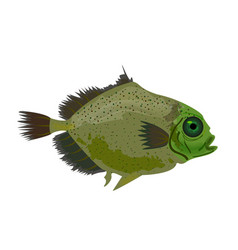 sea green fish isolated on white oceanic fish vector image vector image