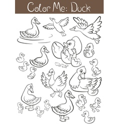 The set of ducks and ducklings vector image