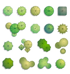 Trees top view for landscape design vector image vector image