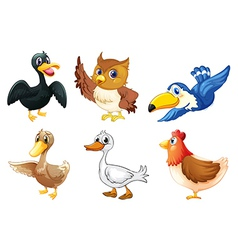 A group of birds vector image