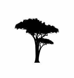 African tropical acacia tree logo icon silhouette vector