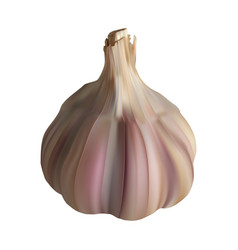 garlic realistic on white vector image