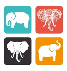 Icon elephant design isolated vector
