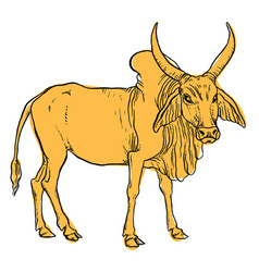 Indian zebu cow vector
