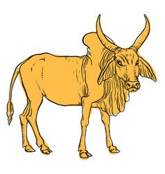 indian zebu cow vector image