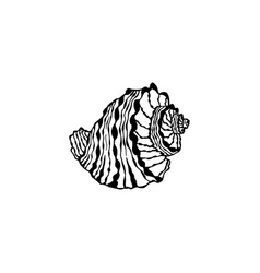 Seashell hand drawn sketches sea shell vector