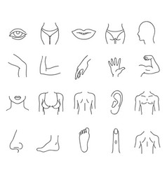 line human male and female body parts set vector image vector image