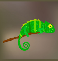 chameleon on a branch on brown background vector image