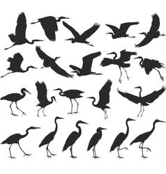 Bird - herons vector