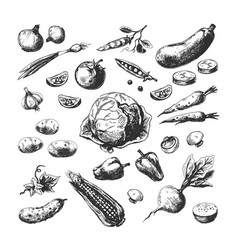 hand drawn vegetables corn tomato potato beet vector image