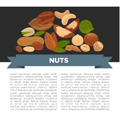 Nuts organic nutrition and raw diet information vector